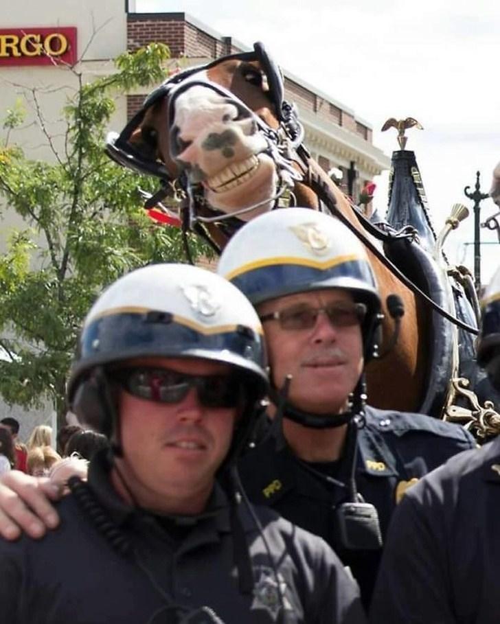 horse photobomb over helmet - RGO PPO