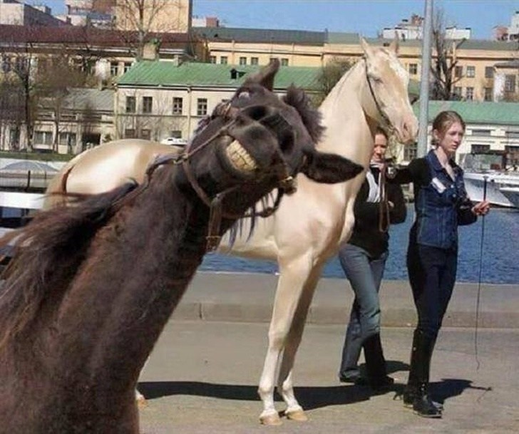 Horse photobombing a prize horse being photographed