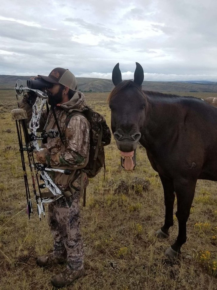 funny pic of a horse sticking its tongue at the camera while standing behind man in camo outfit