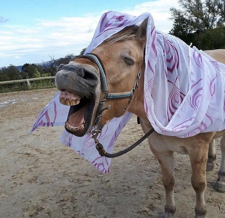 horse smiling like mr ed