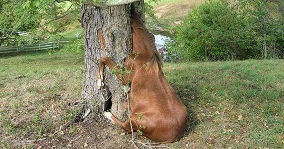 goofy horse in a tree