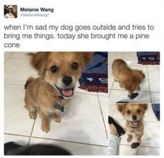 dog meme about a dog that brings gifts to cheer up her owner