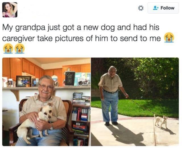 dog meme of a grandpa that got a new dog and he is very happy