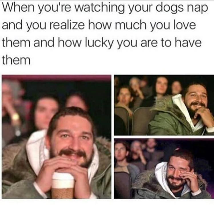 dog meme with Shia LaBeouf about watching your dogs nap because you love them