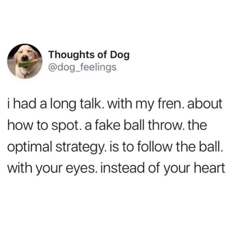 dog meme about how dogs have a strategy on how to spot a fake ball throw