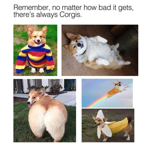 """Caption that reads, """"Remember, no matter how bad it gets, there's always corgis"""" above pics of cute corgis"""