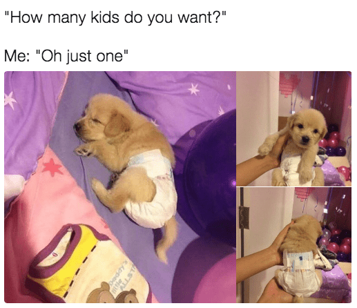"""Caption that reads, """"'How many kids do you want?' Me: 'Oh just one'"""" above pics of a little golden retriever puppy wearing diapers"""
