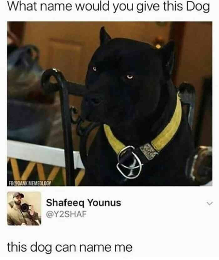 meme - Dog - What name would you give this Dog FB BANK MEMEOLOGY Shafeeq Younus @Y2SHAF this dog can name me