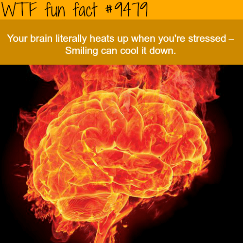 """Text that reads, """"Your brain literally heats up when you're stressed - smiling can cool it down"""""""
