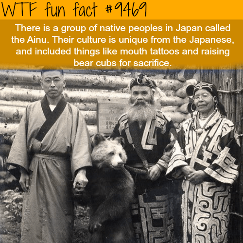 Adaptation - WTF fun fact #146 There is a group of native peoples in Japan called the Ainu. Their culture is unique from the Japanese, and included things like mouth tattoos and raising bear cubs for sacrifice
