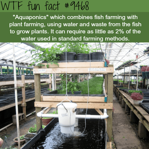 """Water - WTF fun fact #1468 """"Aquaponics"""" which combines fish farming with plant farming, using water and waste from the fish to grow plants. It can require as little as 2% of the water used in standard farming methods."""