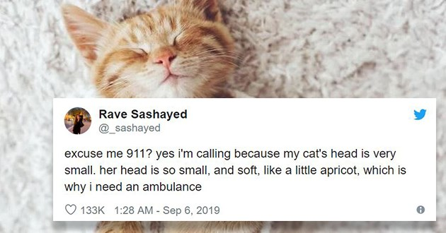 cat tweets funny cute