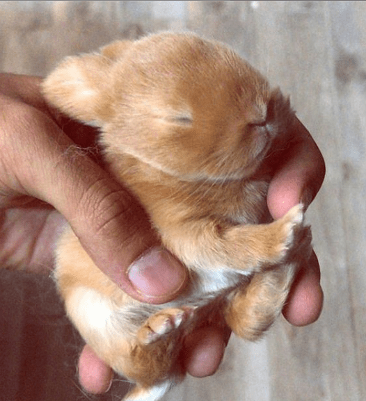 cute animals - Puppy