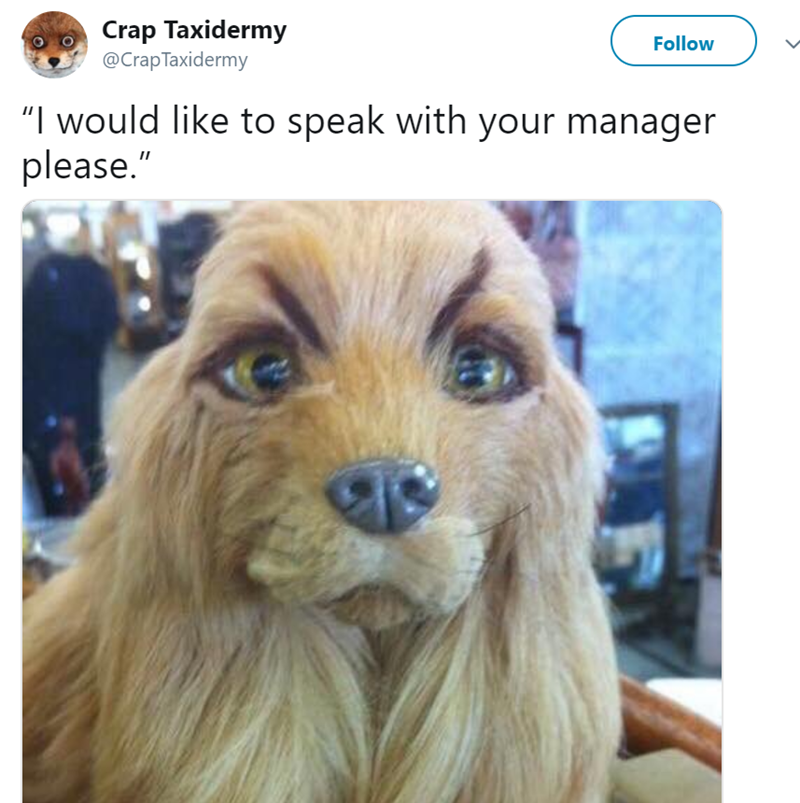 """Dog - Crap Taxidermy @CrapTaxidermy Follow """"I would like to speak with your manager please."""""""