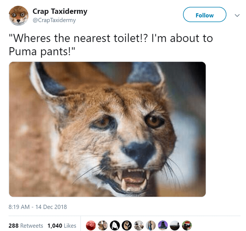 """Wildlife - Crap Taxidermy @Crap Taxidermy Follow """"Wheres the nearest toilet!? I'm about to Puma pants!"""" 8:19 AM - 14 Dec 2018 288 Retweets 1,040 Likes"""