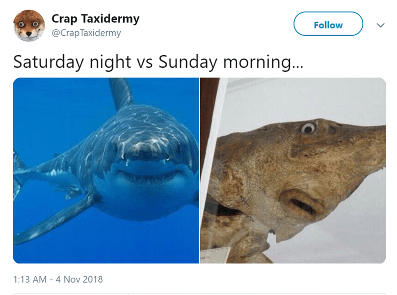 Fish - Crap Taxidermy @Crap Taxidermy Follow Saturday night vs Sunday morning... 1:13 AM - 4 Nov 2018