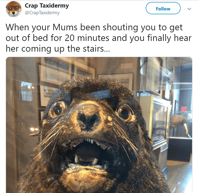 Fur seal - Crap Taxidermy @Crap Taxidermy Follow When your Mums been shouting you to get out of bed for 20 minutes and you finally hear her coming up the stairs...