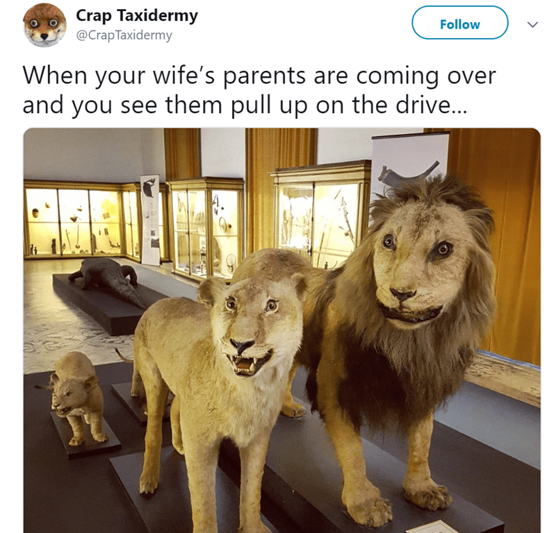 Lion - Crap Taxidermy @Crap Taxidermy Follow When your wife's parents are coming over and you see them pull up on the drive...
