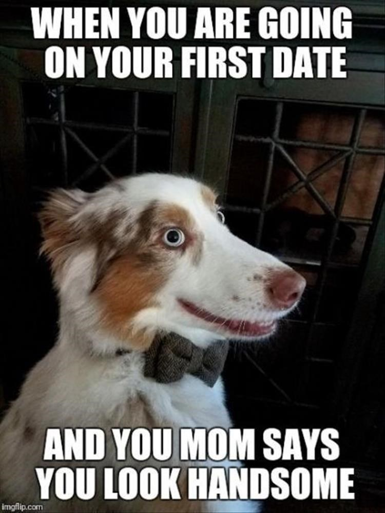 Dog - WHEN YOU ARE GOING ON YOUR FIRST DATE AND YOU MOM SAYS YOU LOOK HANDSOME imgflip.com