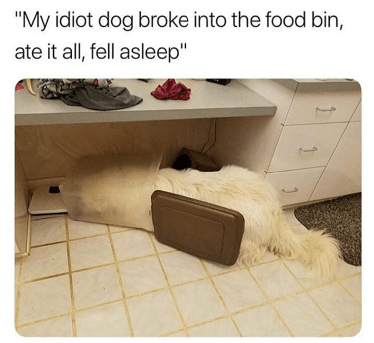 "Furniture - ""My idiot dog broke into the food bin, ate it all, fell asleep"""