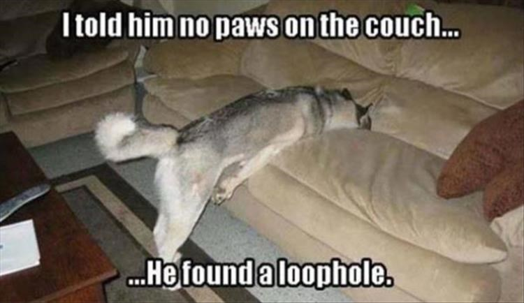 Dog breed - I told him no paws on the couch... ..Hefoundaloophole.