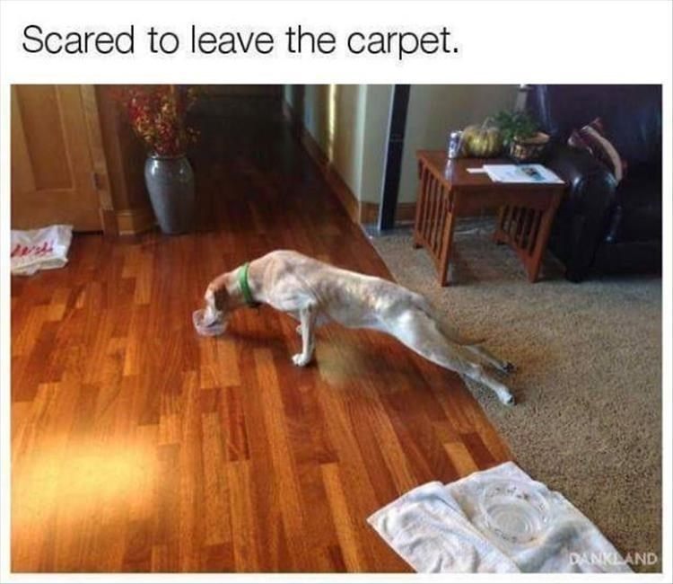 Canidae - Scared to leave the carpet. DANKLAND