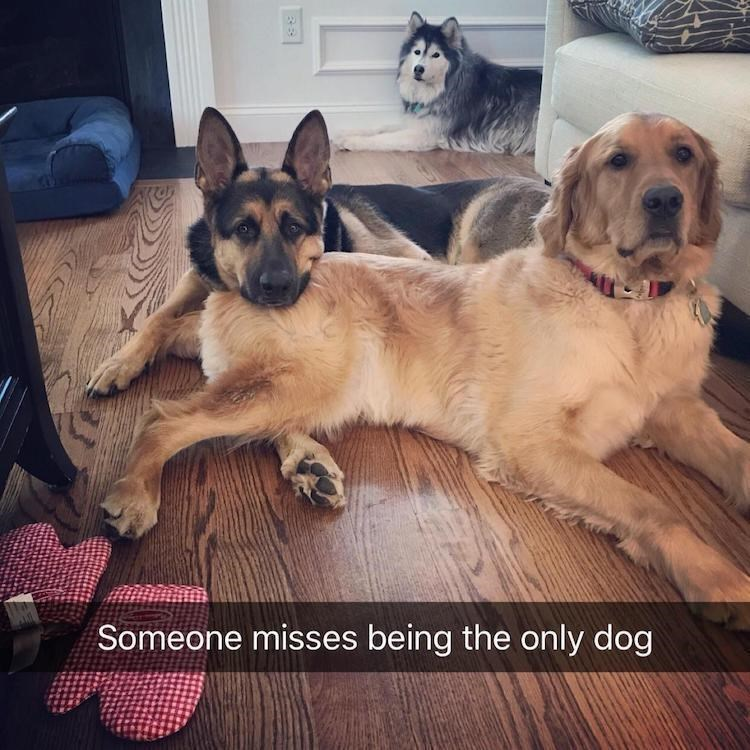 Dog - Someone misses being the only dog