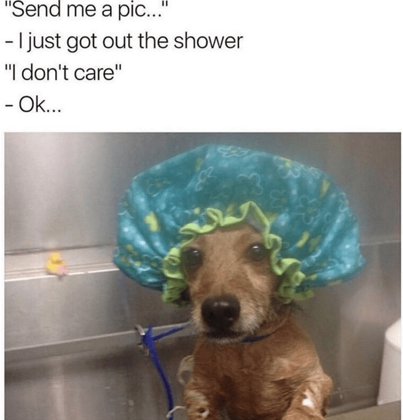 """Dog - """"Send me a pic.."""" -I just got out the shower """"I don't care"""" - Ok..."""