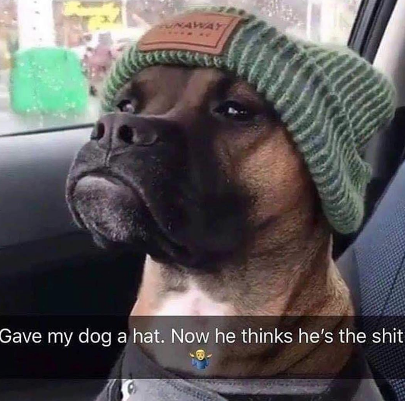 Dog - UNAWAY Gave my dog a hat. Now he thinks he's the shit
