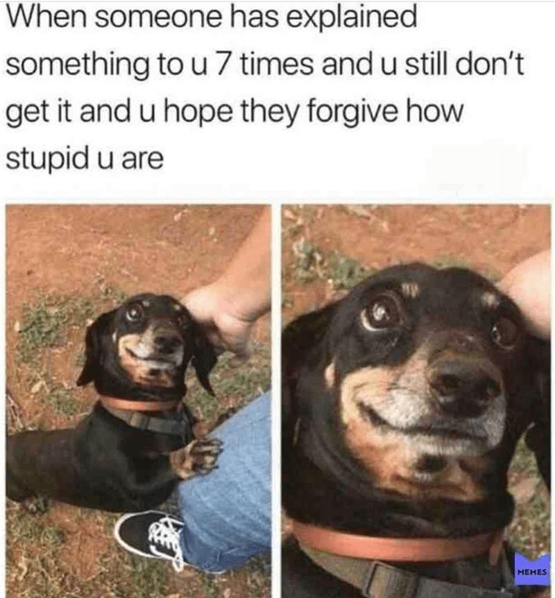 Vertebrate - When someone has explained something to u 7 times and u still don't get it and u hope they forgive how stupid u are MEMES