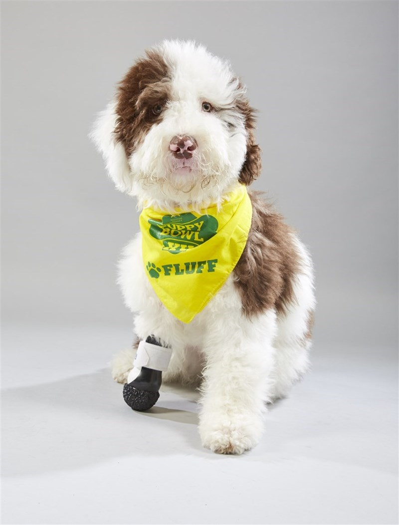 Dog - DRY FLUFF