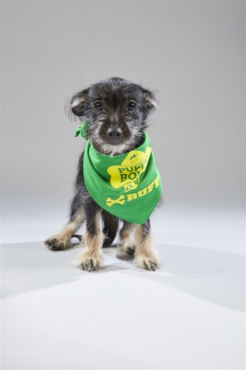 Dog - PUP BOY VRUFF