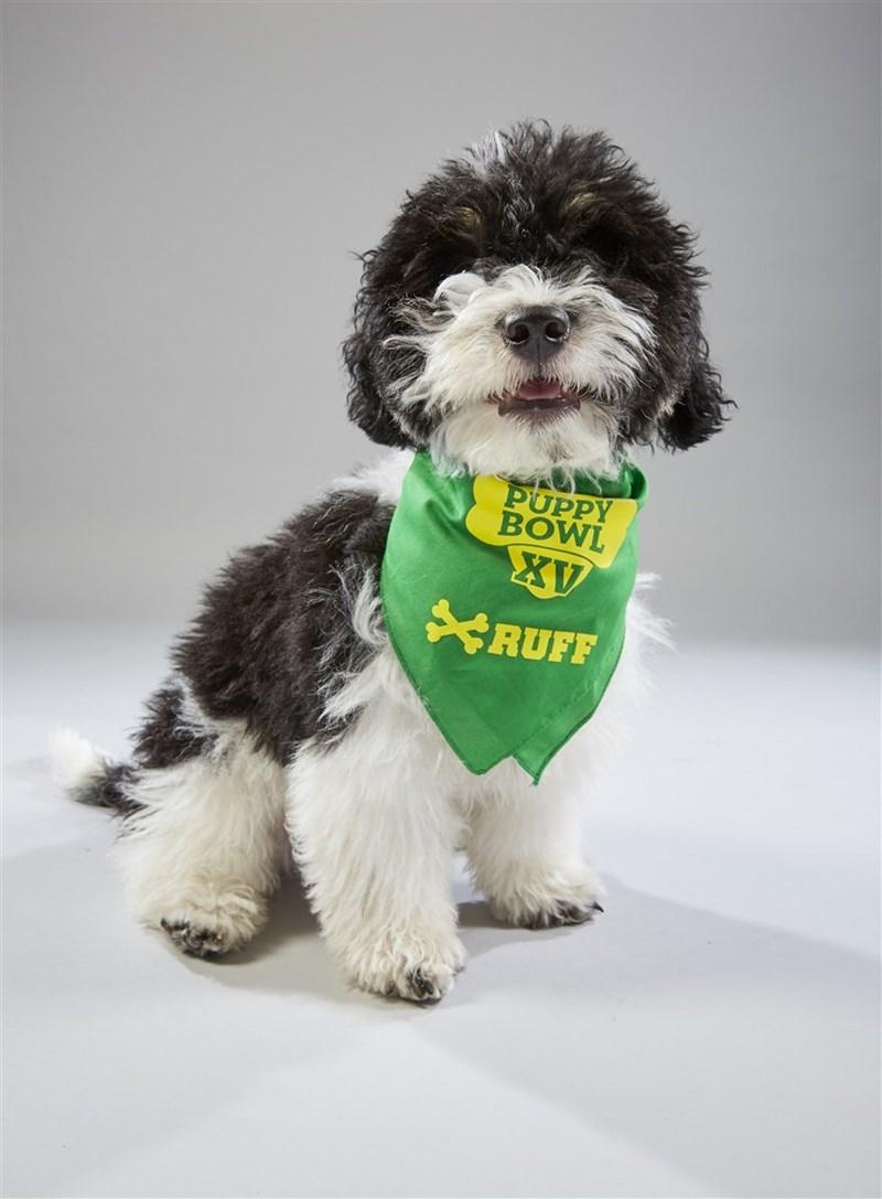 Dog - PUPPY BOWL XV RUFF