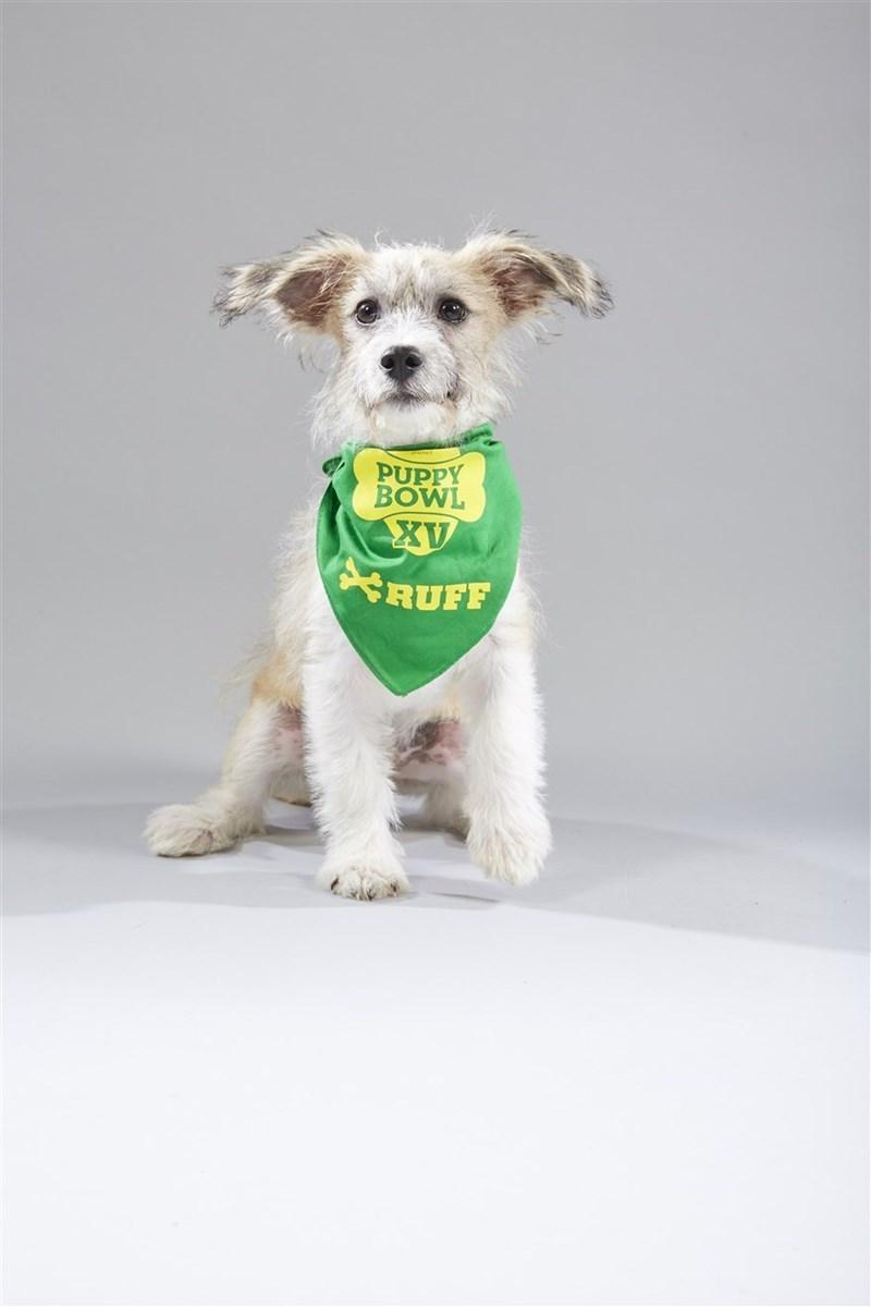 Dog - PUPPY BOWL XV $RUFF
