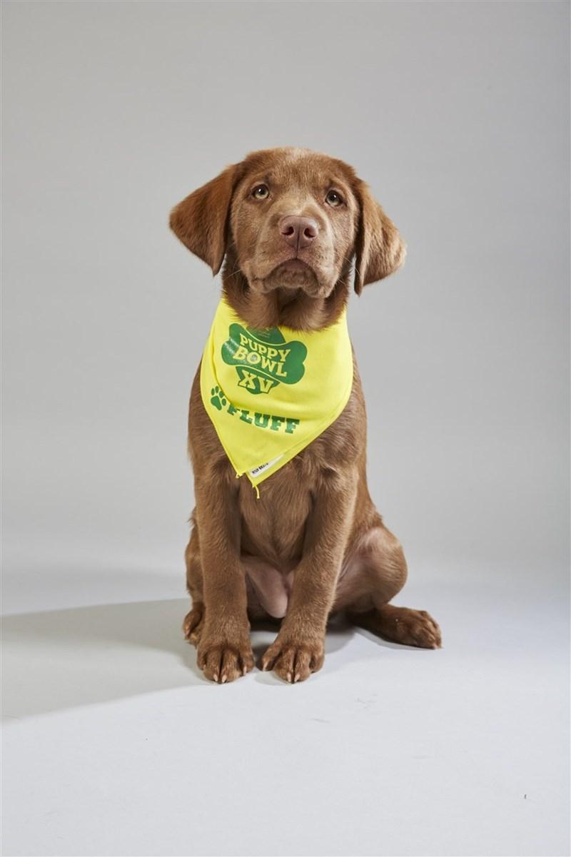 Dog - PUPPY BOWL XV