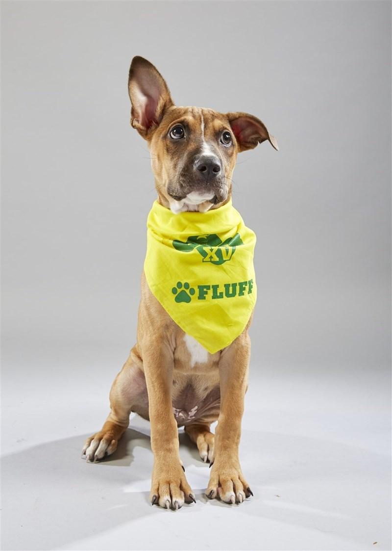 Dog - XV FLUF