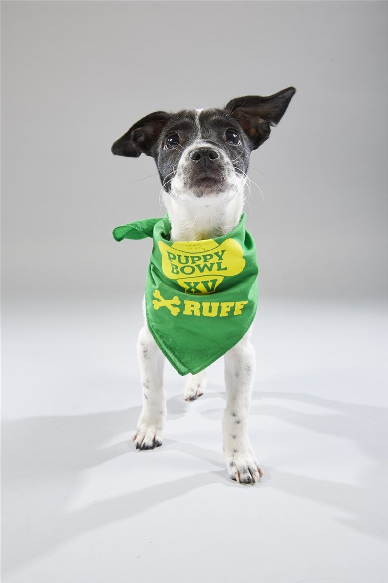 Dog - on PUPPY BOWL XV RUFF