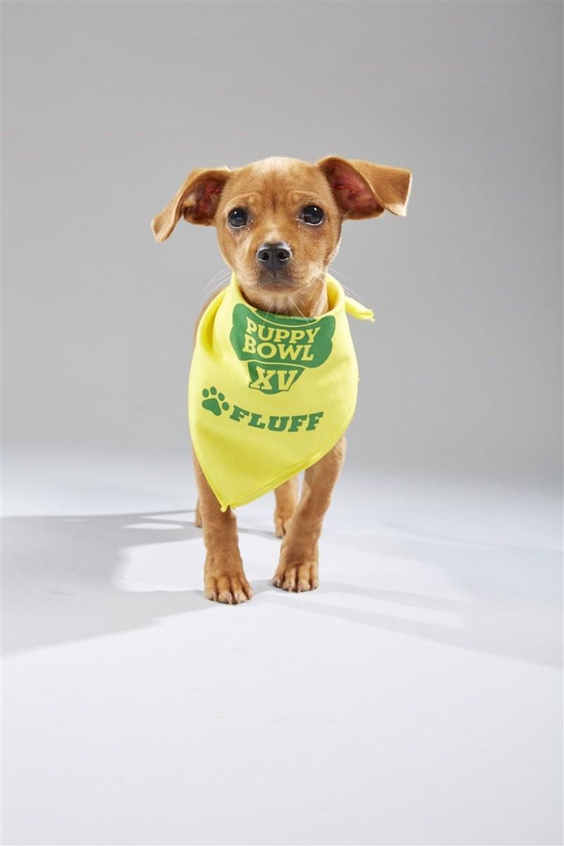 Dog - PUPPY BOWL SFLUFF