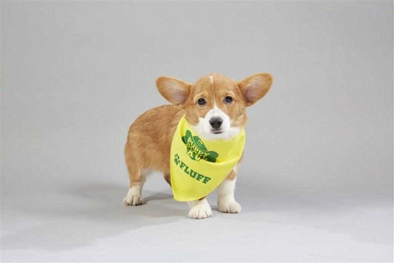 Dog - aena FLUFF
