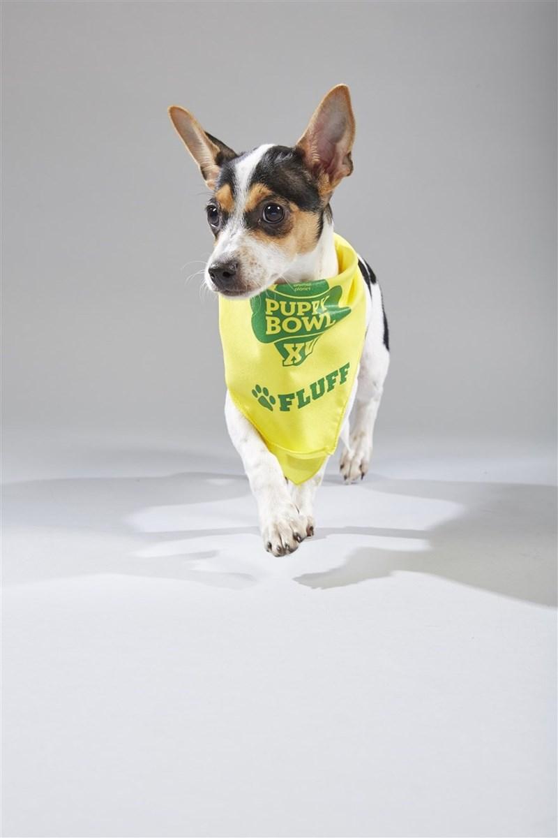 Dog - PUP BOW OFLUFF