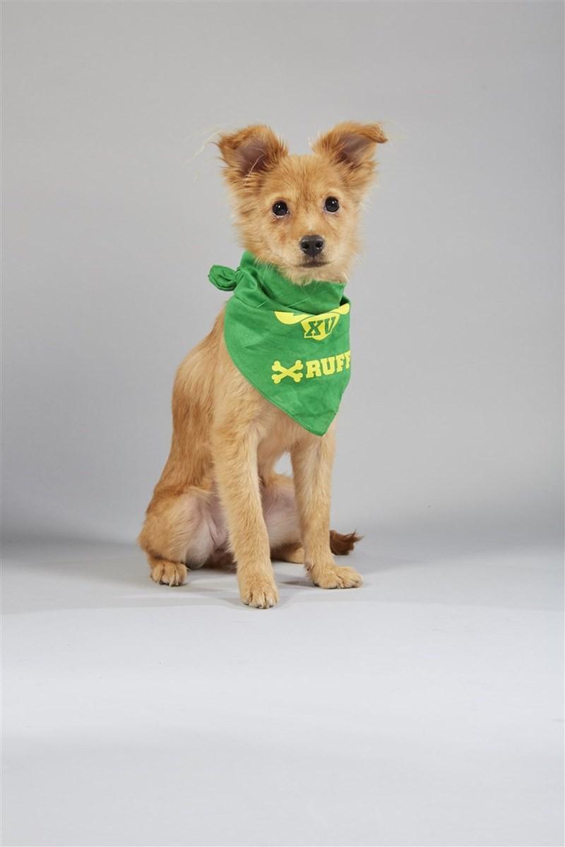 Dog clothes - XV RUF