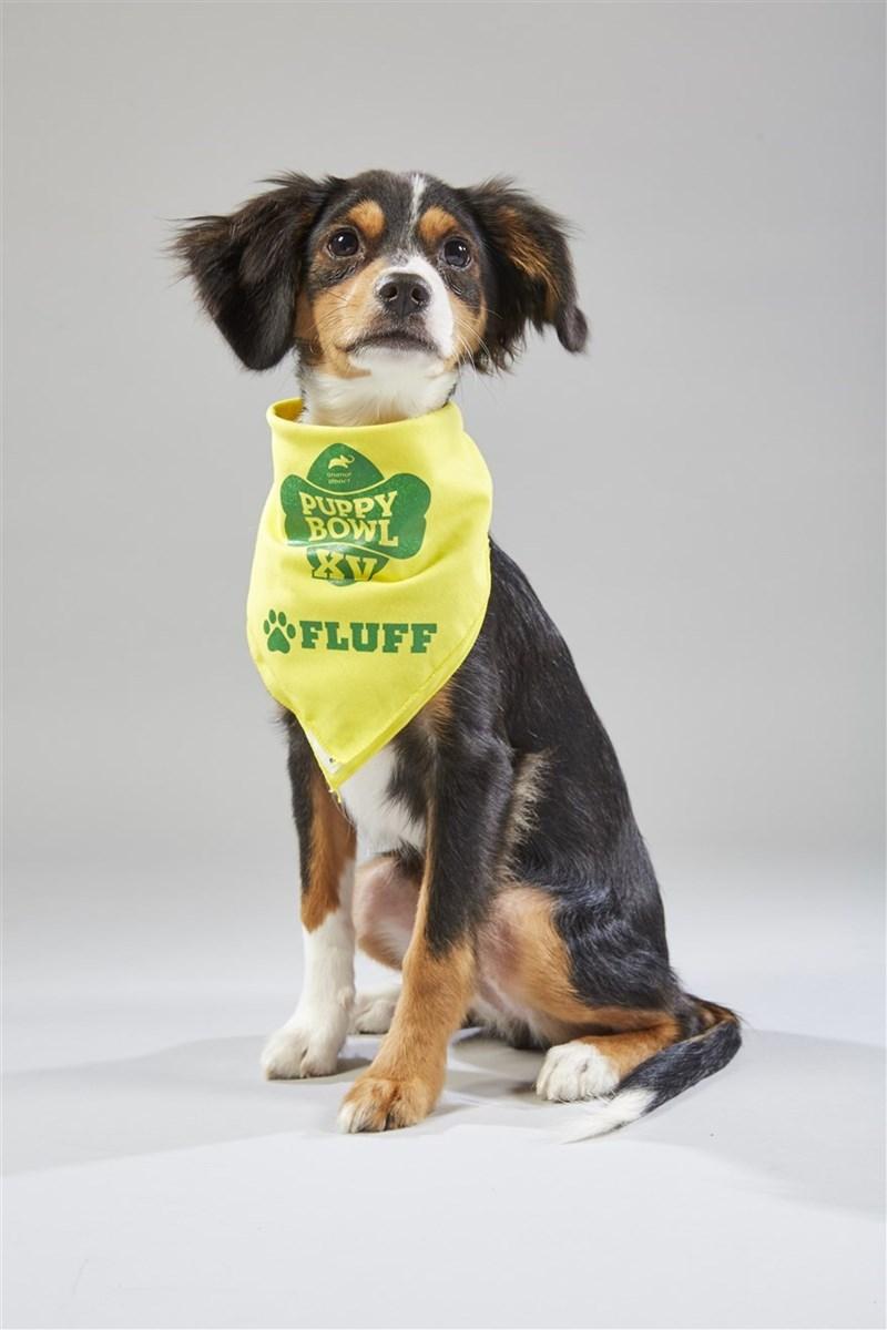 Dog - PUPPY BOWL FLUFF