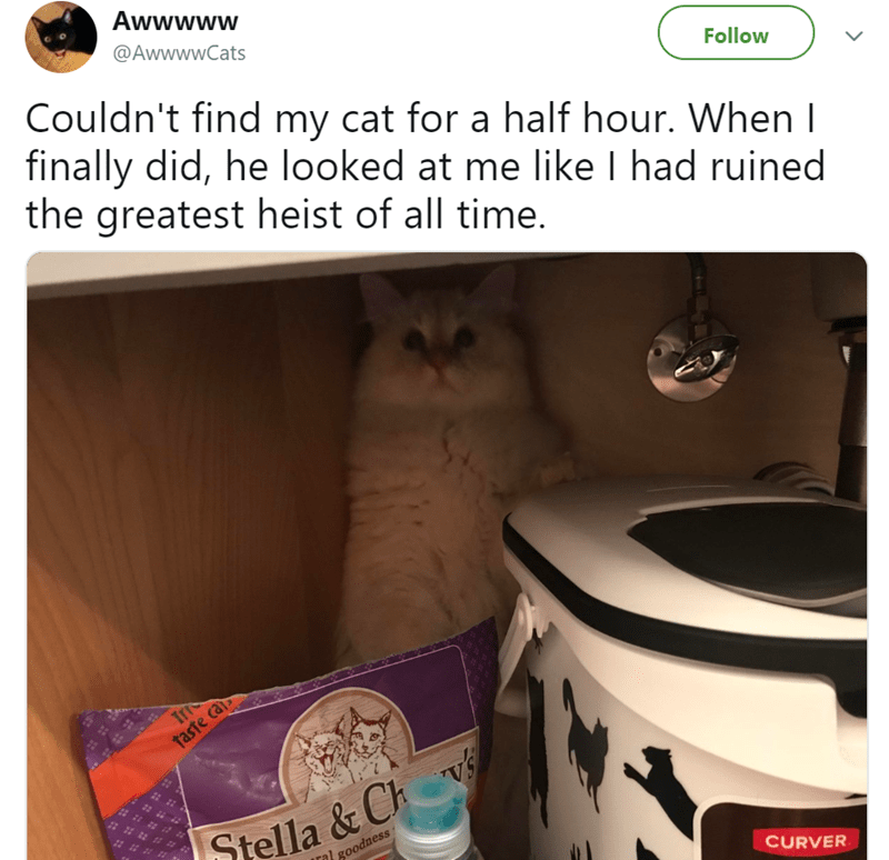 cute cat story of a cat that was hiding from its owner