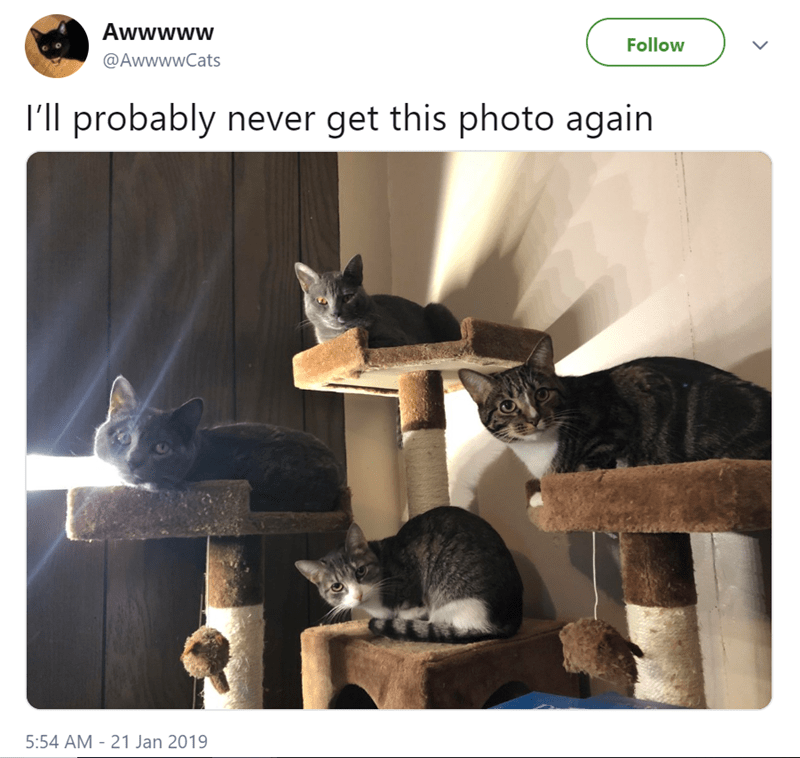 cute cats sitting together on a cat tower