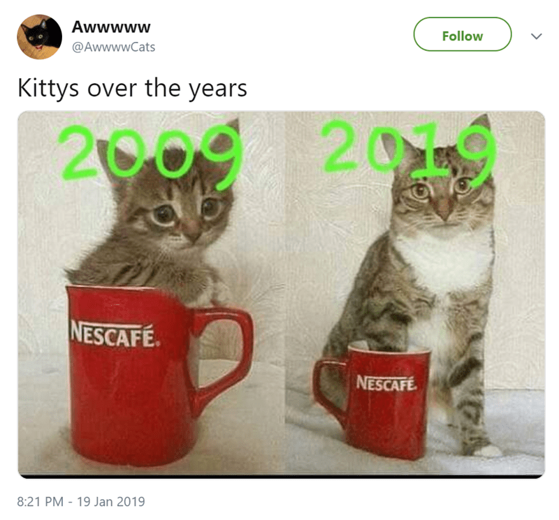 cute cat sitting inside a mug when it was a puppy and then standing next to it as a cat