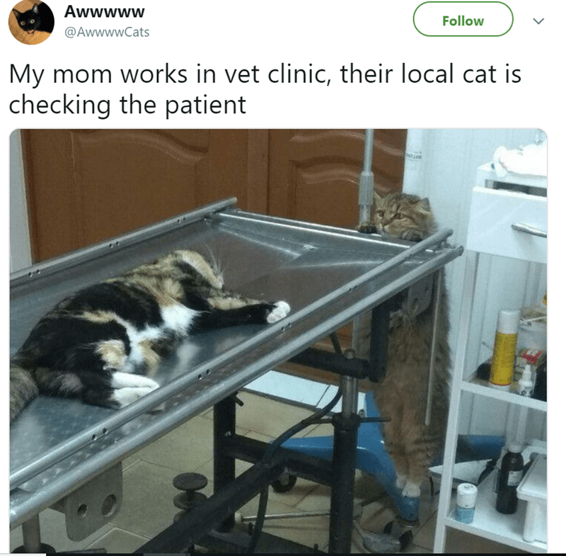 cute cat caturday of a cat checking on another cat at the vet