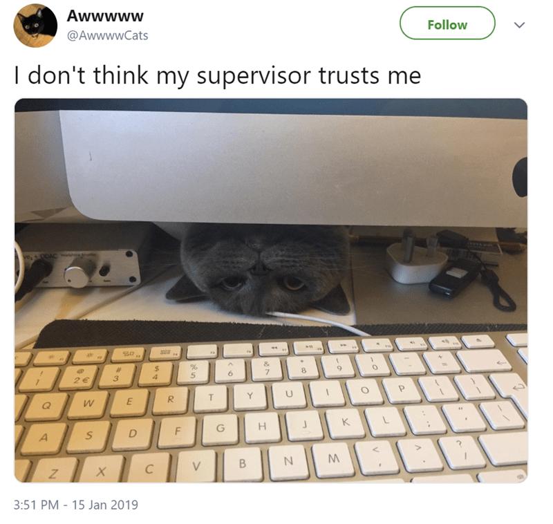 cute cat peeking its head under a laptop screen