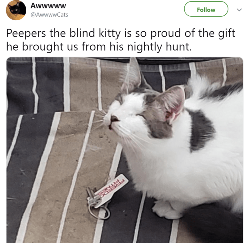 cute cat story of a cat that is blind and brought his owners a set of keys as a gift