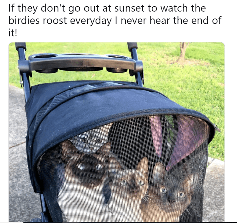 cute cat story of cats in a carriage that like to be taken outside in the mornings