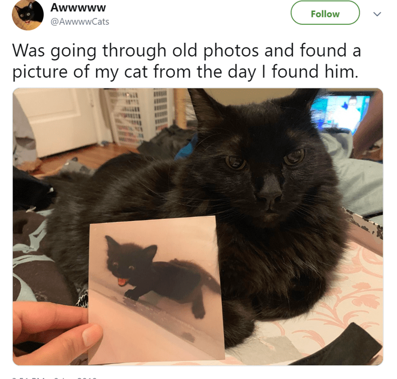 cute cat story of a photo of a cat as a kitten compared to the cat now